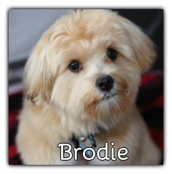 _Brodie.jpg