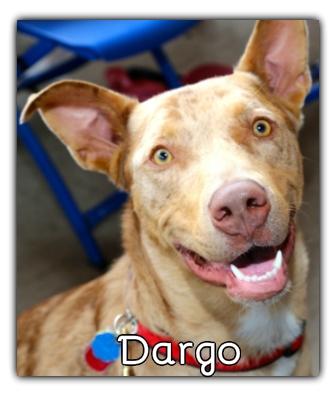 _Dargo.jpg