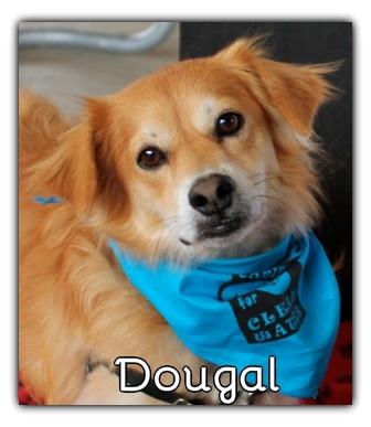 _Dougal.jpg