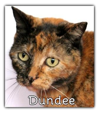 _Dundee.jpg