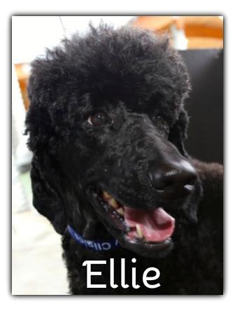 _Ellie.jpg