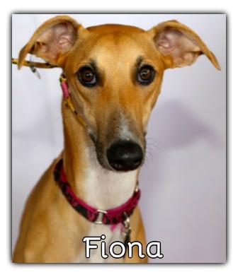 _Fiona.jpg