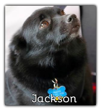 _Jackson.jpg