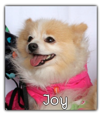 _Joy.jpg