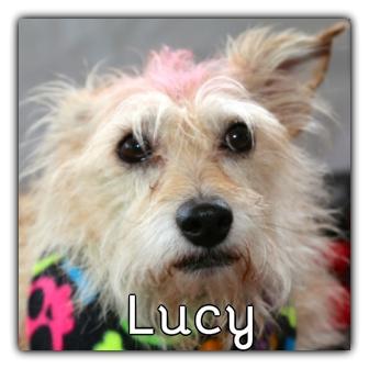 _Lucy_.jpg