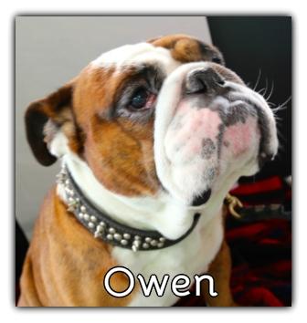 _Owen.jpg