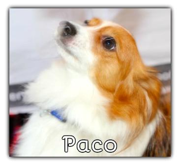 _Paco.jpg