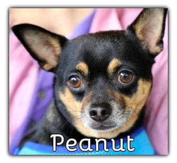 _Peanut.jpg
