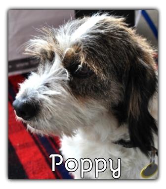 _Poppy.jpg