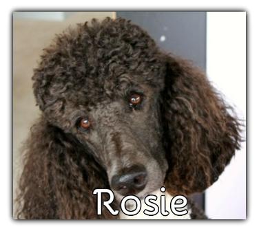 _Rosie_.jpg
