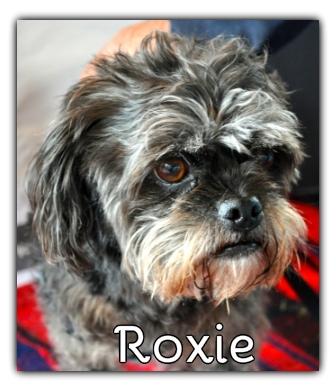 _Roxie.jpg