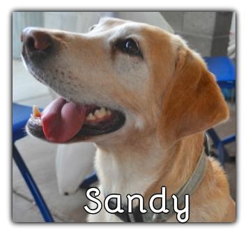 _Sandy.jpg