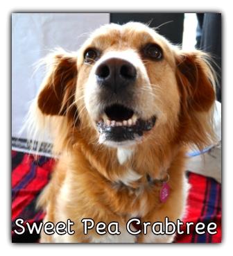 _Sweet Pea Crabtree.jpg