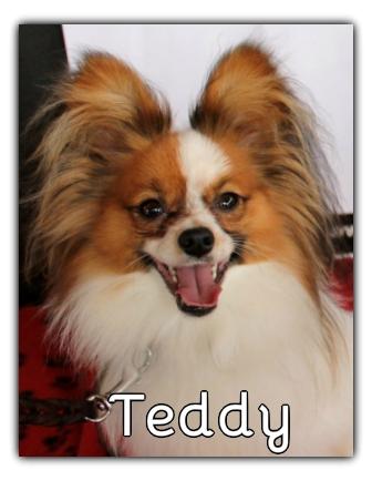 _Teddy.jpg