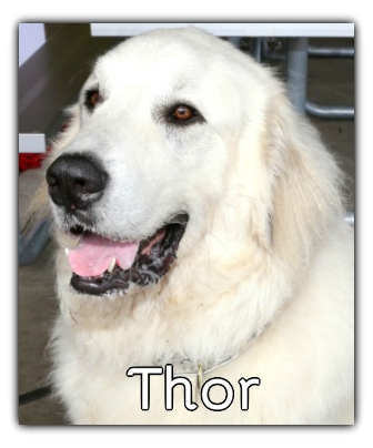 _Thor.jpg