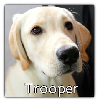 _Trooper.jpg