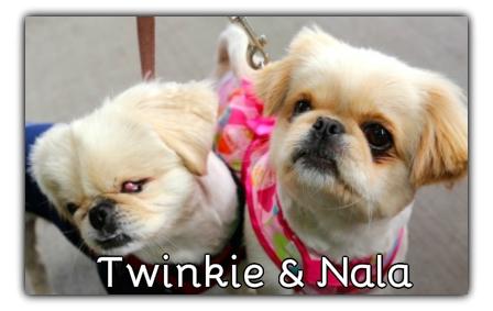 _Twinkie_Nala.jpg