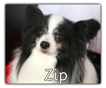 _Zip.jpg