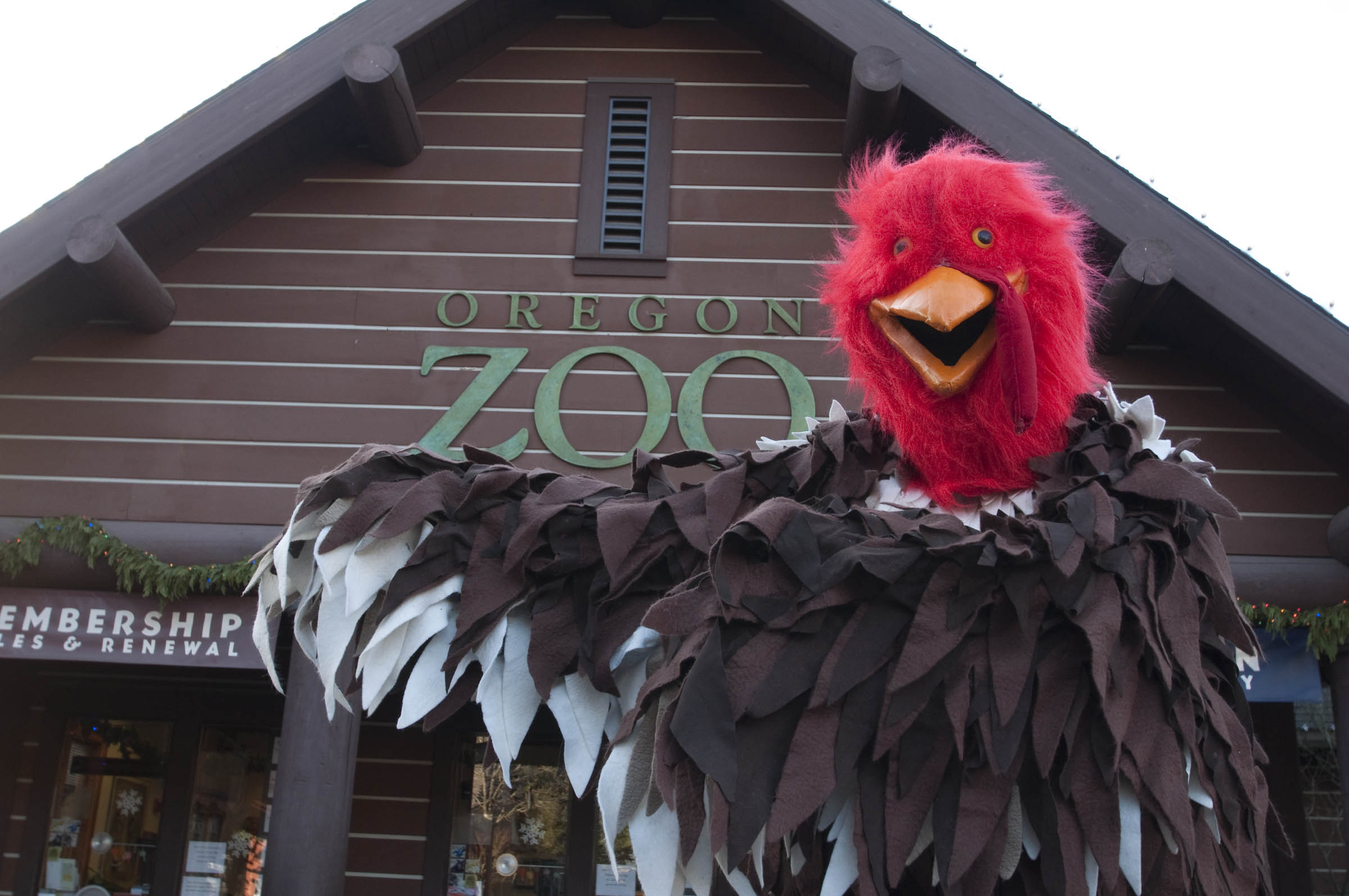 A costumed turkey mascot limbers up outside the Oregon Zoo in preparation for the traditional Thanksgiving Day Turkey Trot. The run-walk takes place Nov. 27 beginning at 8 a.m. at the zoo. Photo by Julie Cudahy, courtesy of the Oregon Zoo.