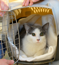 Soma - the first cat that was spayed through Spay & Save on February 10, 2010