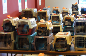Cats waiting for their Spay & Save surgery at the Oregon Humane Society, one of ASAP's five surgery locations