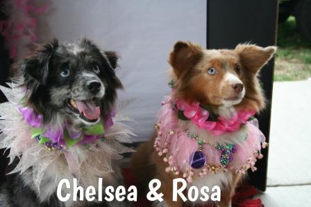 Chelsea_Rosa.jpg