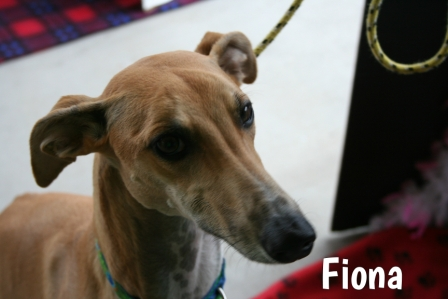 Fiona1.jpg
