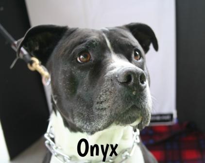 Onyx.jpg