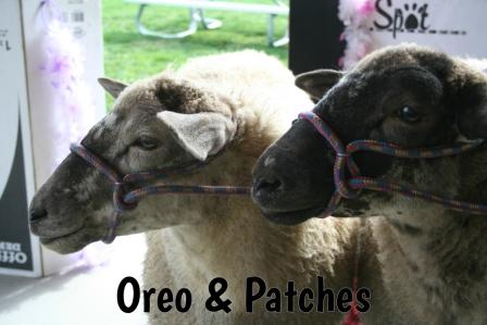 Oreo_Patches.jpg