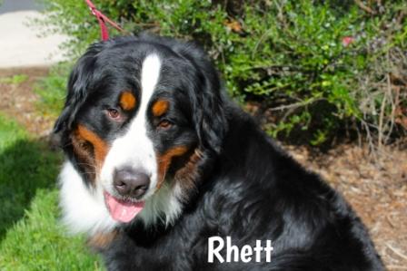 Rhett.jpg