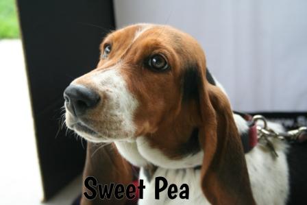 SweetPea.jpg