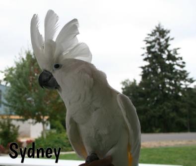Sydney1.jpg