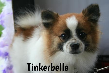 Tinkerbelle.jpg
