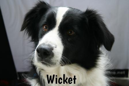 Wicket.jpg