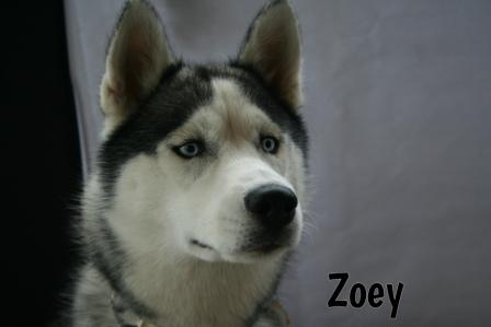 Zoey.jpg