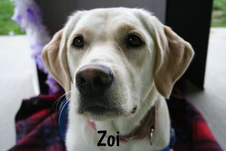 Zoi.jpg