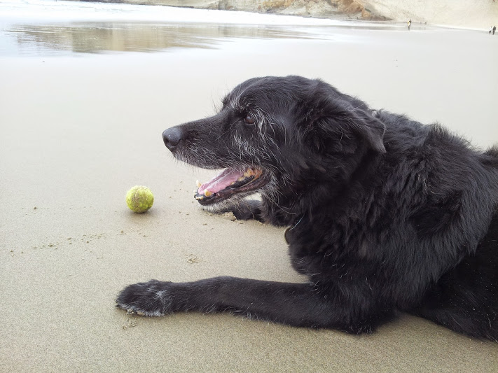 Levi's last beach day - Apr. '15