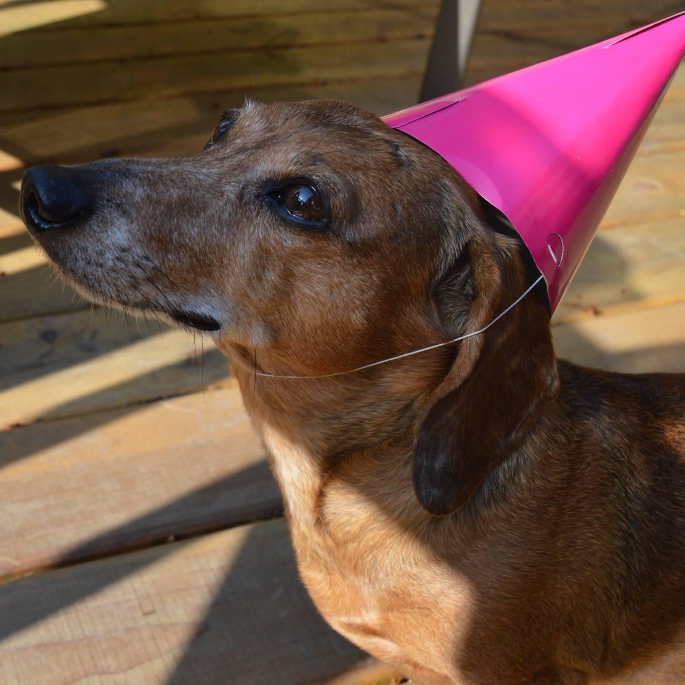 Bruiser celebrating his 12th birthday