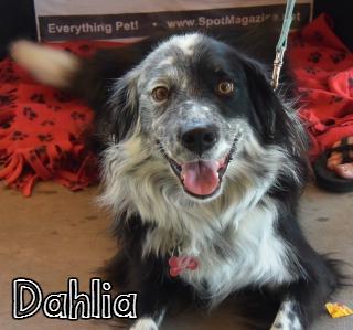 Dahlia1.jpg