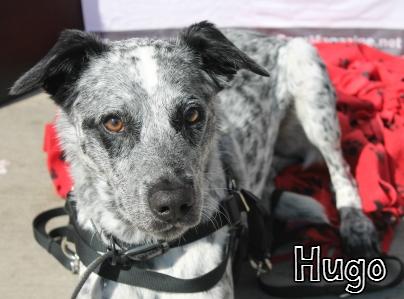 Hugo.jpg