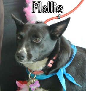 Mollie.jpg