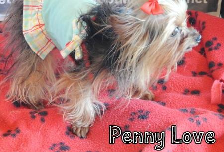 PennyLove.jpg