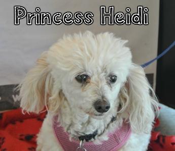 PrincessHeidi.jpg