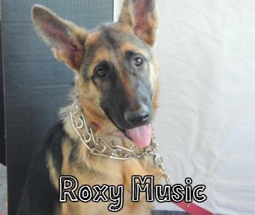RoxyMusic.jpg