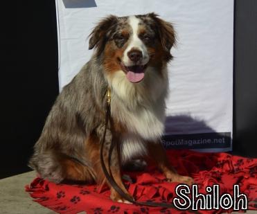 Shiloh.jpg