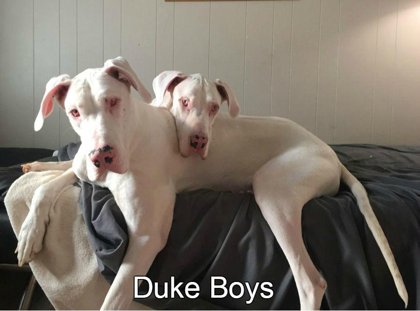 DukeBoys.jpg