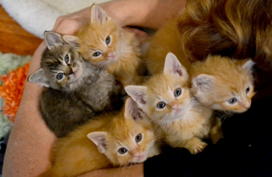 Fostering kittens fills your heart - and arms - with love! Photo by Cassidy Devore