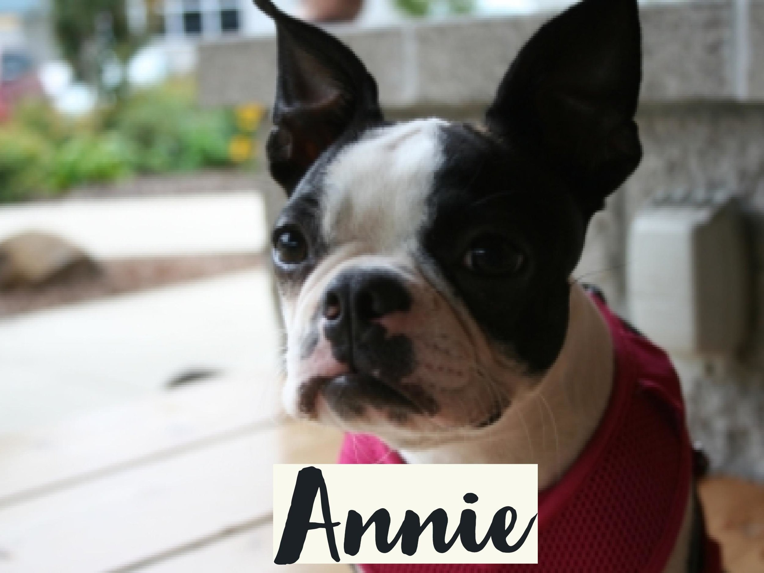 Annie_WV17.jpg