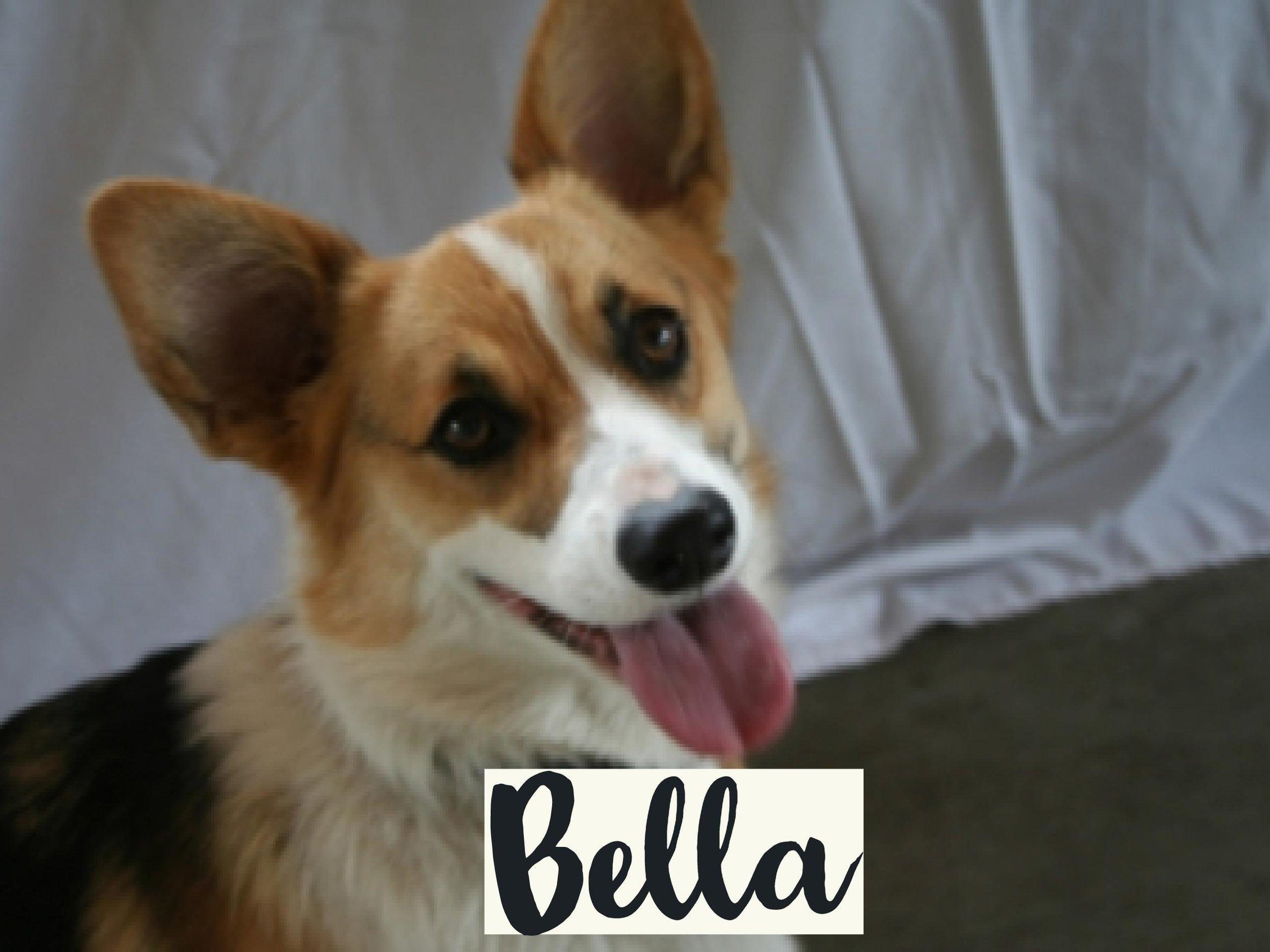 Bella_WV17.jpg
