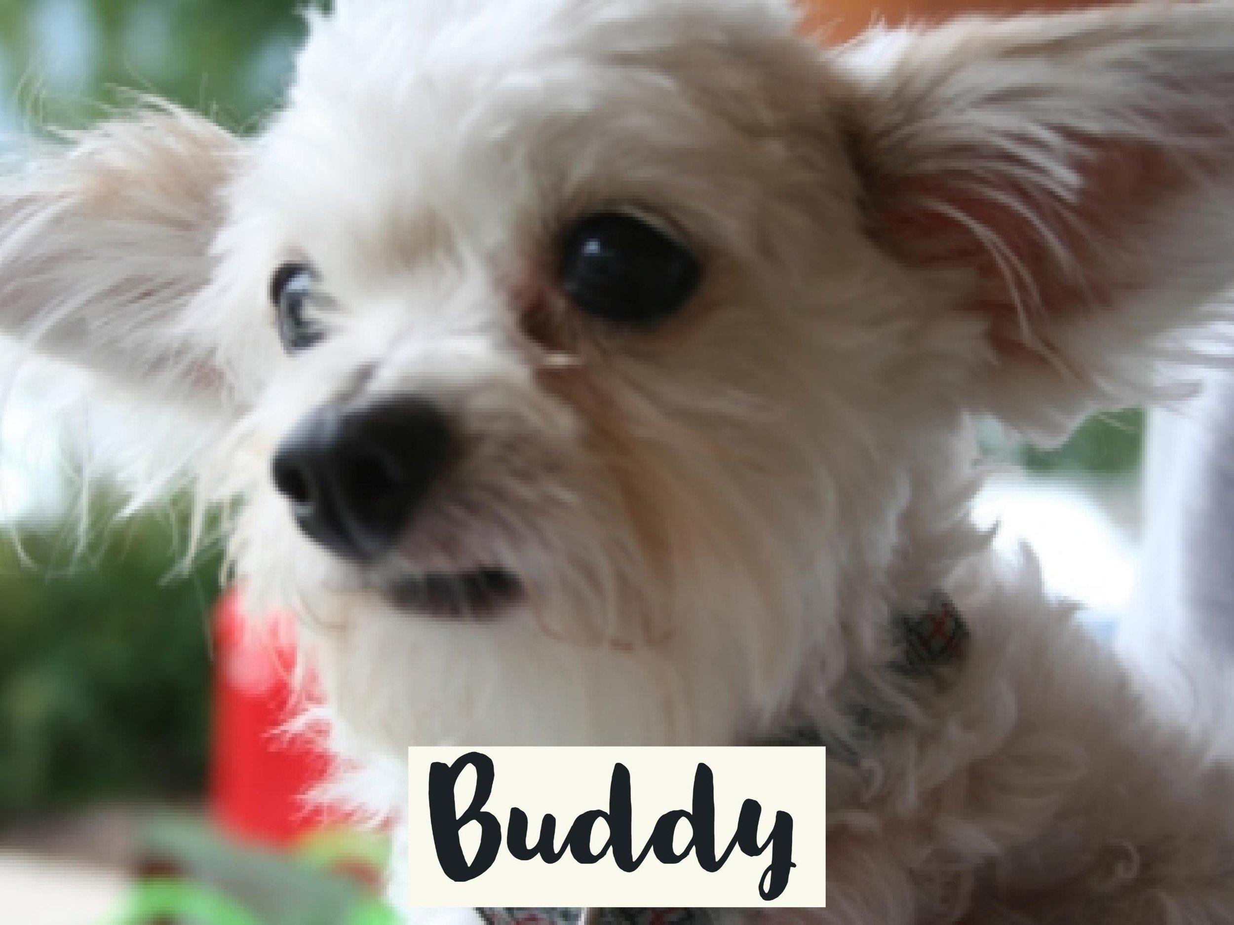 Buddy_2WV17.jpg